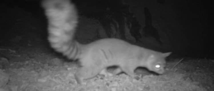 Wildcamera aanschaffen - Jachtloods