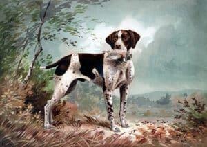 Jachthonden, veelgemaakte fouten
