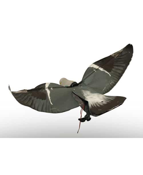 sillosocks motorizes pigeon