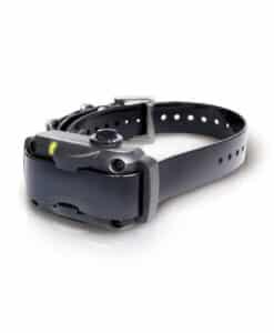 Dogtra YS600 anti-blafband