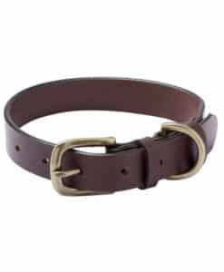 Le chameau hondenhalsband
